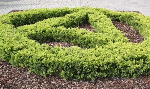 Sövényből nyírt logó fogadja az érkezőt