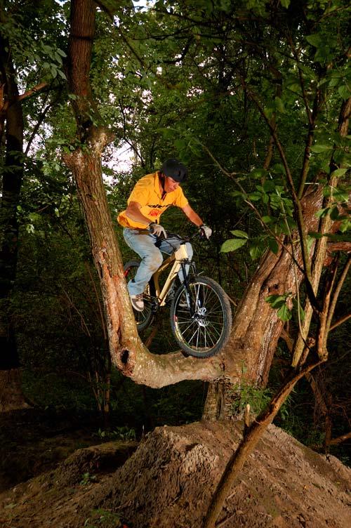 Nosebong a fára