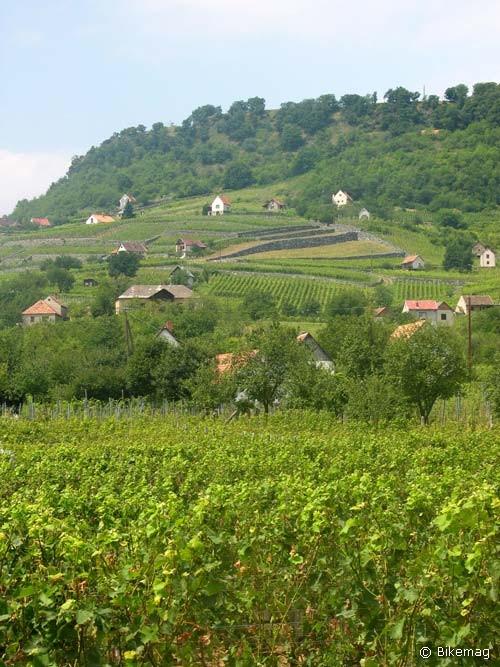 A szőlőhegy jellemző nézete észak felől
