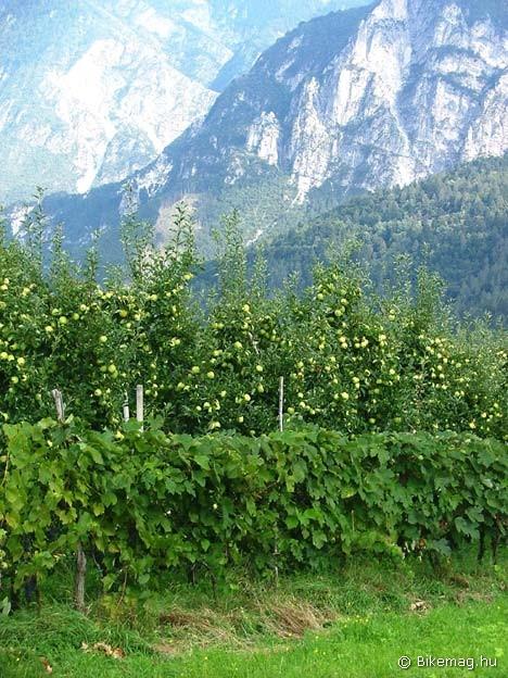 Trentino_17