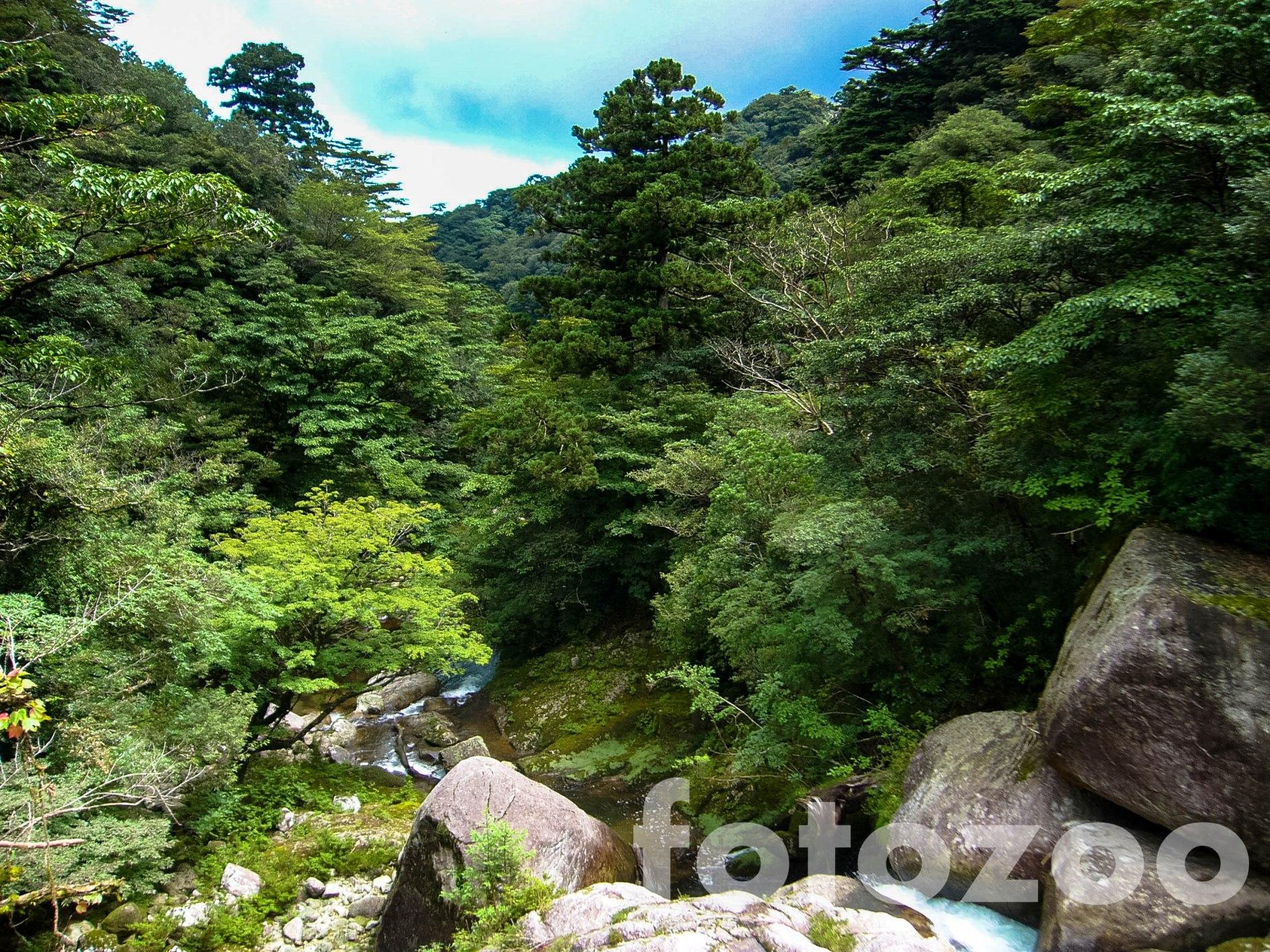 Yakushima erdei ihlették Hayao Miyazaki, A vadon hercegnője című alkotását.