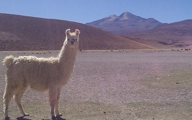 Ha nem ragaszkodunk az aszfalthoz, a bolíviai kénbányákhoz vezető útnál nincs sok magasabb!