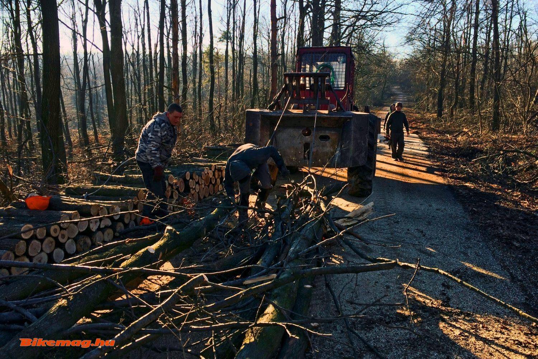 Az Erdészet munkatársai dolgoznak Pap-rét környékén
