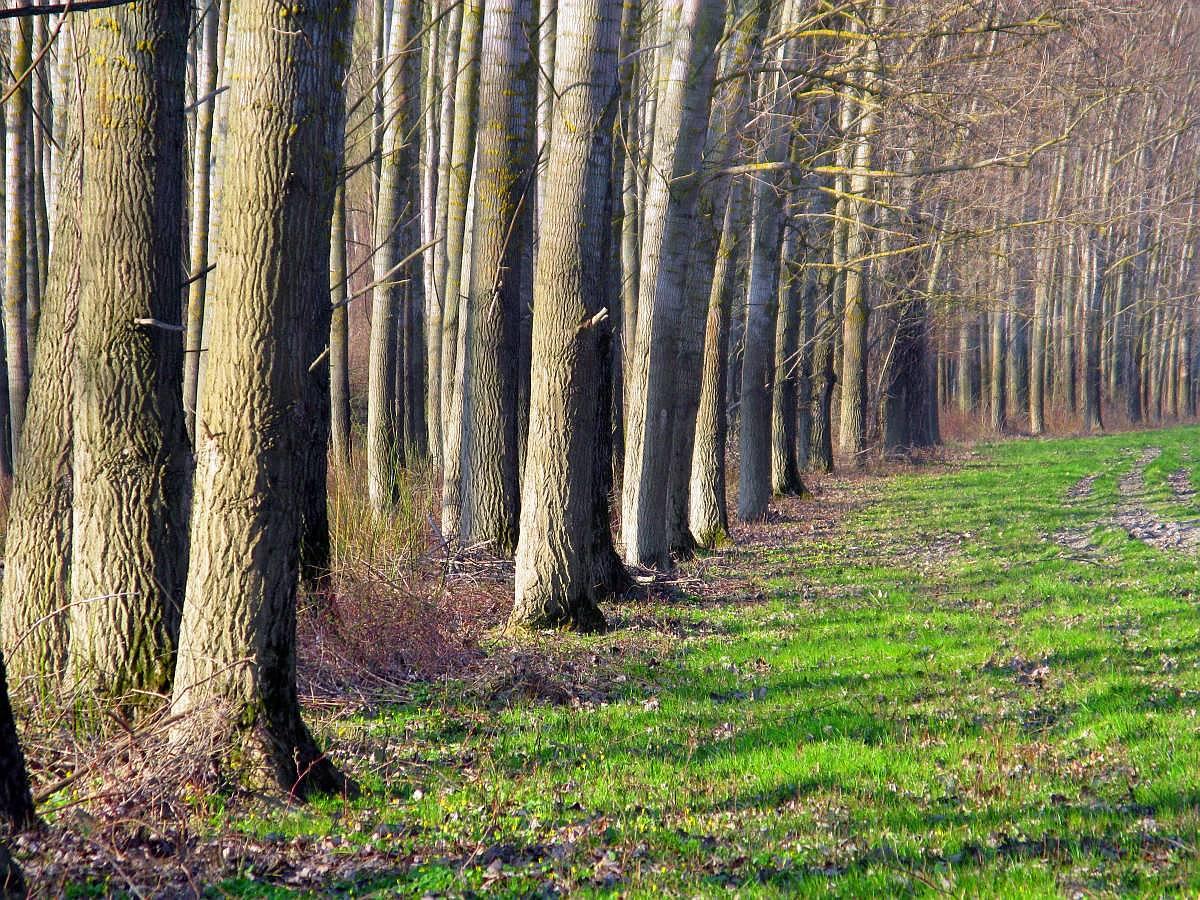 Ártéri erdő