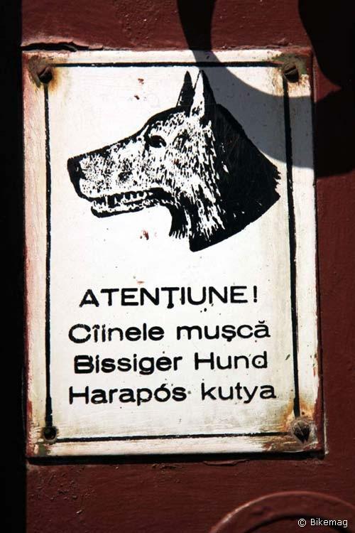 A kutya három nyelven harapós Medgyesen